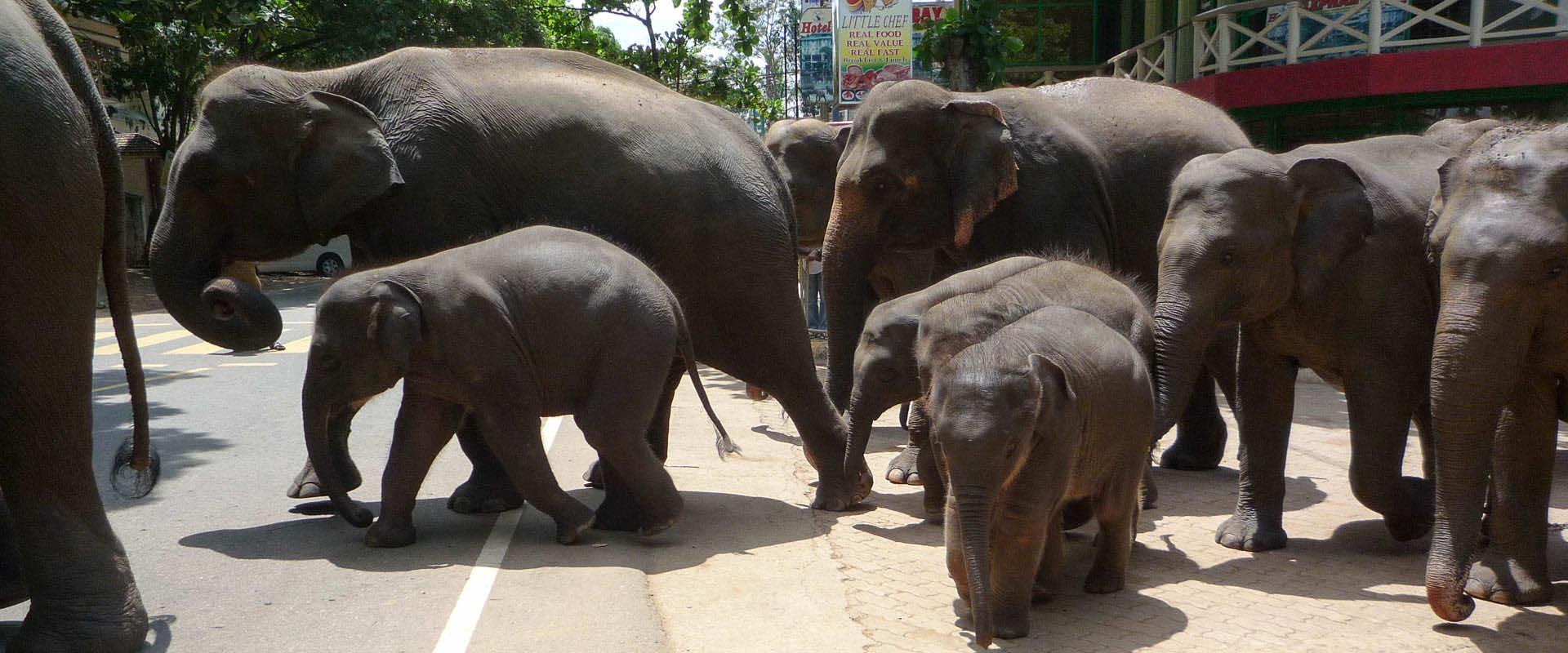 sri lanka elephant orphanage