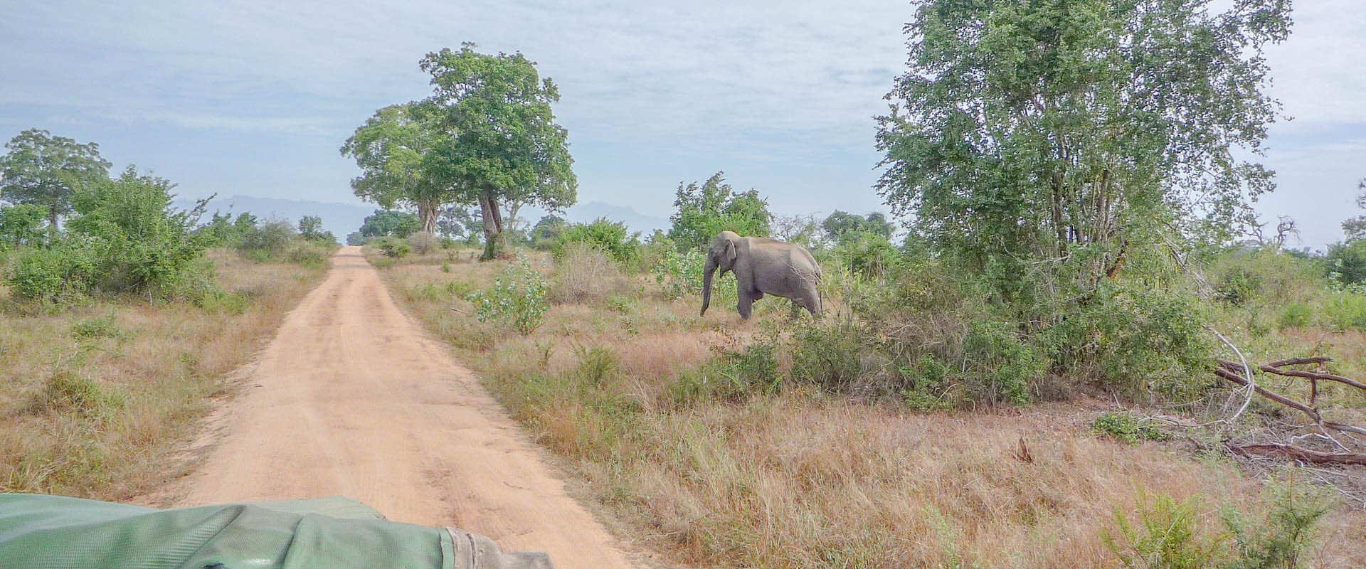 sri lanka jeep safari