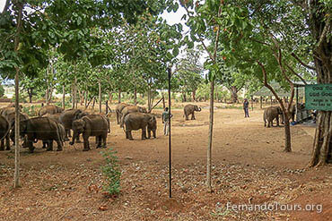 The Elephant Transit Home